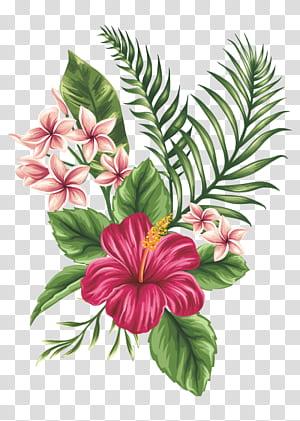 Menggambar Sketsa Bunga, bunga yang dilukis dengan Tangan, lukisan bunga kembang sepatu merah png