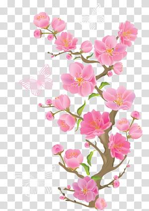 Bunga merah muda, Cabang Musim Semi dengan Kupu-kupu, kupu-kupu di atas bunga png