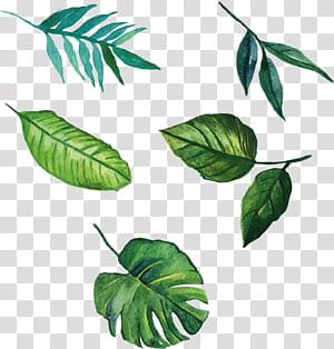 Leaf Euclidean, daun yang dilukis dengan tangan, ilustrasi lima daun hijau png