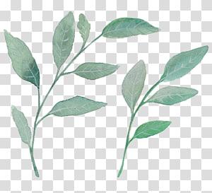ilustrasi dua cabang hijau, Tanaman lukisan Cat Air Daun, daun cat air hijau segar PNG clipart