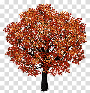 lukisan pohon, maple Merah maple Jepang warna daun musim gugur, Pohon Maple Merah PNG clipart