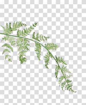 Lukisan Cat Air Daun, Daun Cat Air, tanaman berdaun hijau png