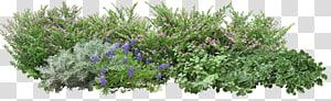 Angels Garden Tree, bunga rumput, tanaman hijau png