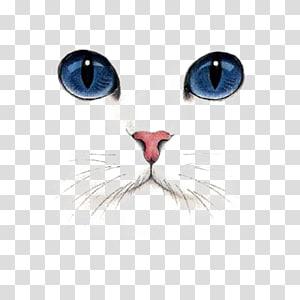 Kucing Kucing Anjing Shorthair Inggris Shorthair, Cat Tangan Dicat, ilustrasi kucing bermata biru png