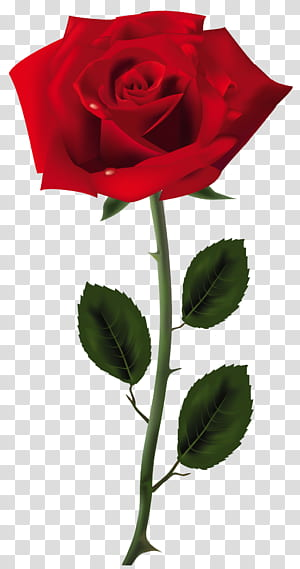 Mawar, Seni Mawar Merah, ilustrasi mawar merah png