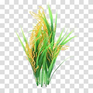 sawah, kue beras puding beras, nasi png