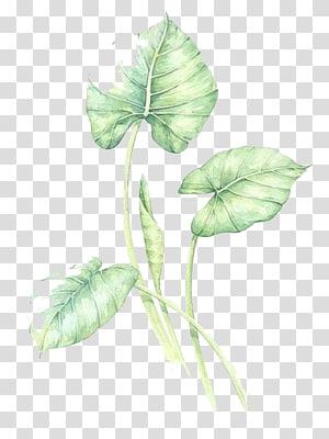 Cat air daun hijau, tiga daun hijau png