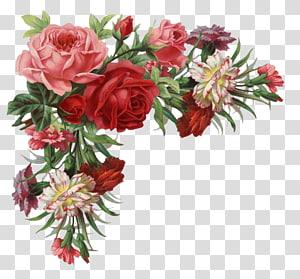 Flower Rose Pakaian vintage, Rose border, ilustrasi bunga mawar merah dan pink png