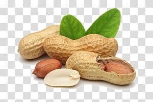 kacang, kacang goreng Minyak kacang Kacang pohon alergi, kacang tanah png