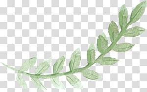 Lukisan cat air Pancake Sydney Brunch, Daun hijau, daun tanaman hijau png