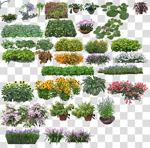 ilustrasi berbagai macam tanaman, Rendering, Creative Flower png