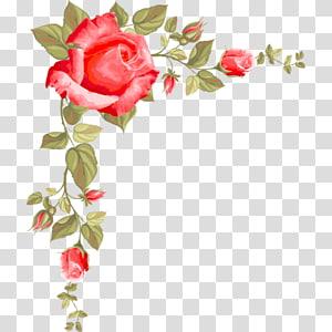 mawar merah dengan gambar daun, Paper Rose Flower, Rose borders png