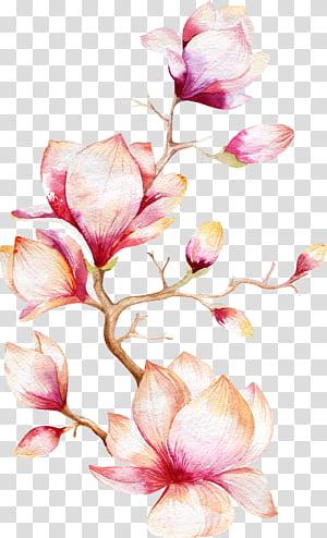 Lukisan cat air Bunga Magnolia, Pohon Anggrek, ilustrasi bunga merah muda b png